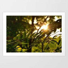Sunburst through leaves Art Print