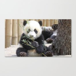 Super Dainty Small Young Animal Eating Eucalyptus Leafs Ultra High Resolution Canvas Print