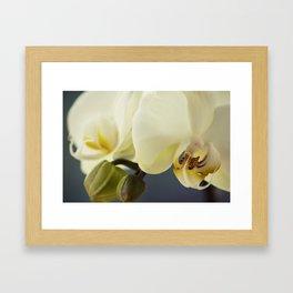 White orchid #2 Framed Art Print