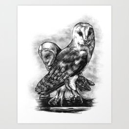 Tyto alba Art Print