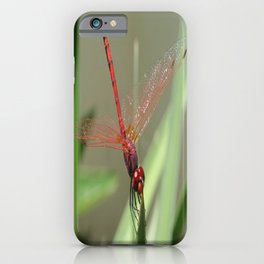 Beautiful Red Skimmer or Firecracker Dragonfly iPhone Case
