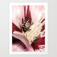 Wasp on flower 7 Art Print