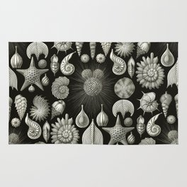 Ernst Haeckel - Thalamphora (Seashells) Rug