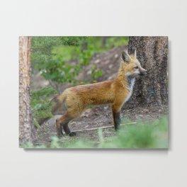 Young Fox Metal Print