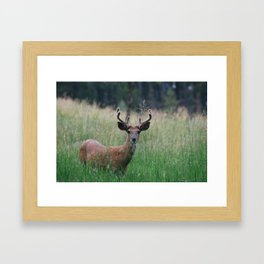 Deer in Black Hills Framed Art Print