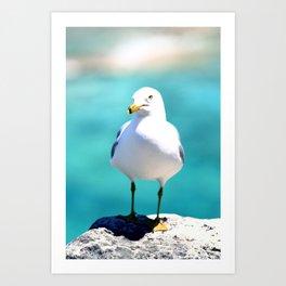 Grotto Seagull Art Print