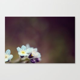 Forget me knot Canvas Print