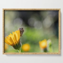 Funny insect on yellow flower Serving Tray