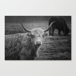 Highland Cow Black and White Photo Canvas Print