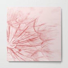 Dandelion In Pink Metal Print