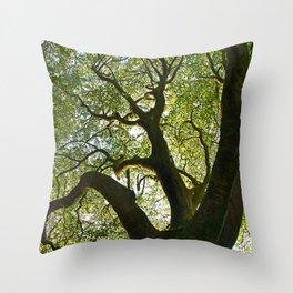 Beech Tree Canopy 2 Throw Pillow