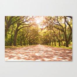 Savannah Oak Trees Canvas Print