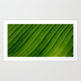 Natural Curves Art Print