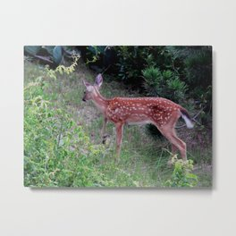 Young deer on the bluff Metal Print