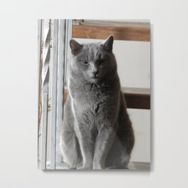 Cat cat on the stairs Metal Print