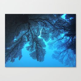 Fan Coral Canvas Print