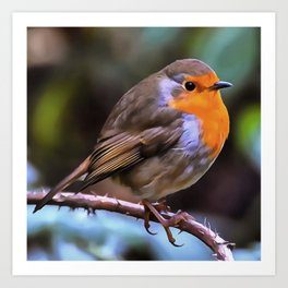Plump Robin Perched On A Branch Art Print