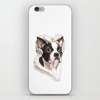 boston terrier iPhone & iPod Skins featuring Boston Terrier by Petty Portraits