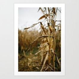 Autumn Cornstalk I Art Print