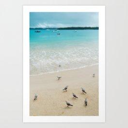 A group of seagulls on the beach at Kuto Bay, New Caledonia. Art Print
