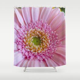 Pink Gerbera Flower in Detail with Yellow Bits Shower Curtain