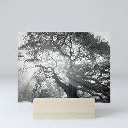 Angel Oak 2 Mini Art Print