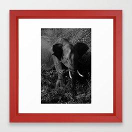 Elephant in Udawalawe National Park Framed Art Print