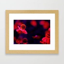 last Summerflowers in the dark Framed Art Print