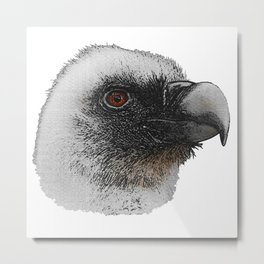 Vulture chicks, birds of prey, birds of prey Metal Print