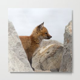 Watercolor Fox, Red Fox 41, Union Reservoir, Boulder Metal Print