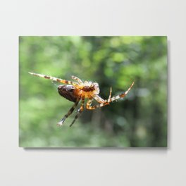 Happy spider Metal Print