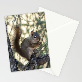 Soldotna Red Squirrel Stationery Cards