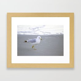 Sea Gull Stroll Framed Art Print