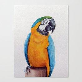 Macaw II Canvas Print