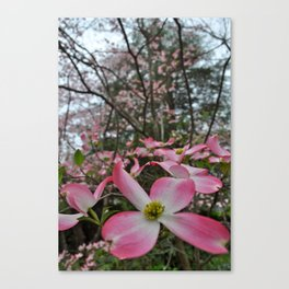 Dogwood. Canvas Print