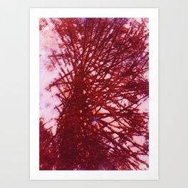 Redwood Tree Art Print