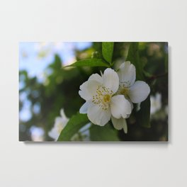 White flowers with four petals Metal Print