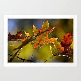 Itasca's Leaves Art Print