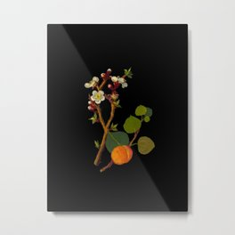 Prunus Arminiaca Mary Delany Vintage Botanical Paper Flower Collage Metal Print
