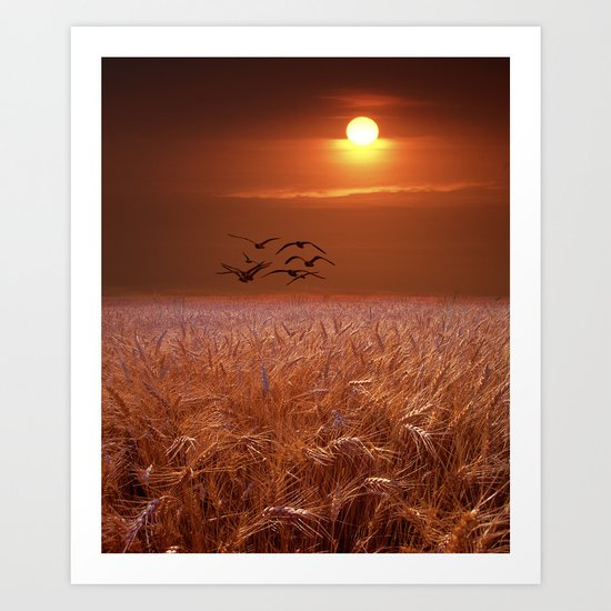 Gulls flying over a Wheat Field at Sunset Art Print