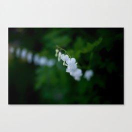 Cinderella Flowers Canvas Print