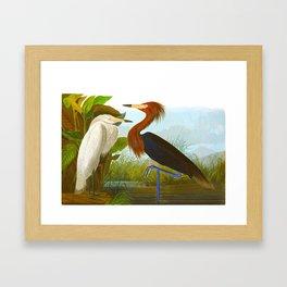 Purple Heron Framed Art Print