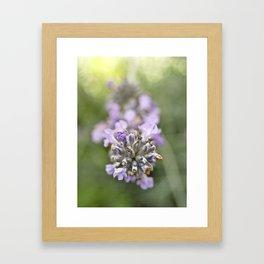 Lavender (1) Framed Art Print