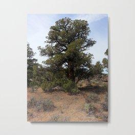 Juniper Tree Metal Print