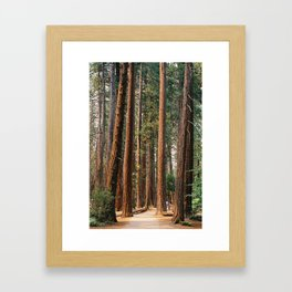 pines in Yosemite Framed Art Print