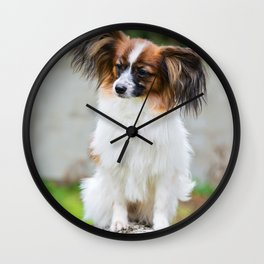 Outdoor portrait of a papillon purebreed dog Wall Clock