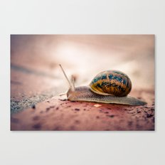 Slowly, but Surely... Canvas Print