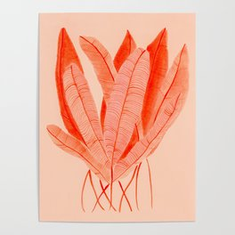 Feathered Palm Fronds Poster