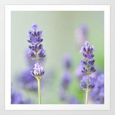 lavender I Art Print