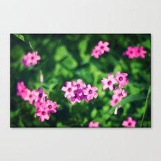little  cute  flowers Canvas Print